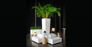 palm tree with white lounge seating