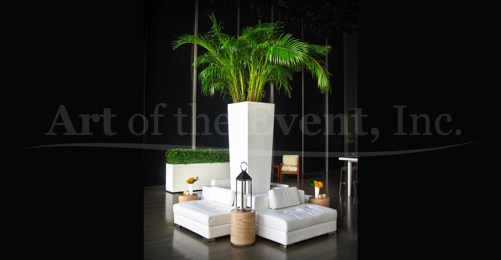 Large palm tree and white lounge chairs